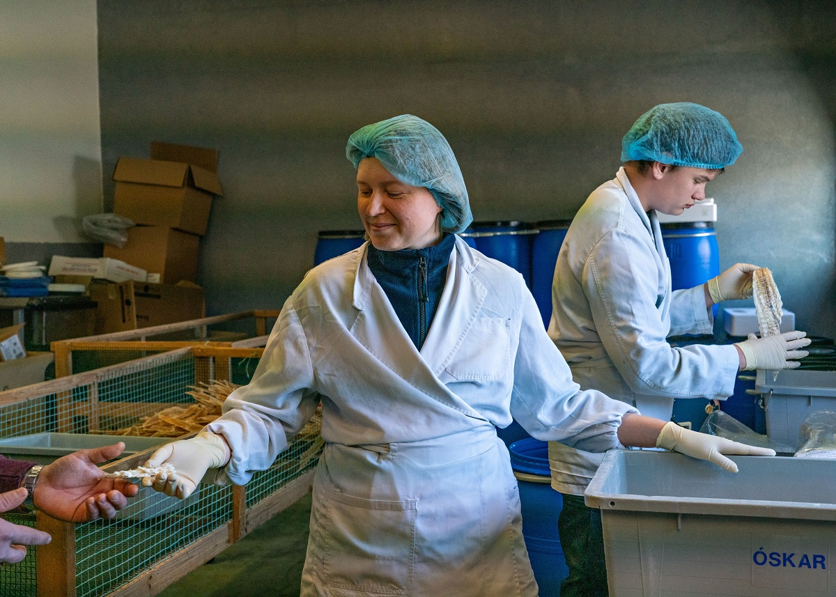 Borgarfjörður eystri fiskvinnsla atvinnulíf